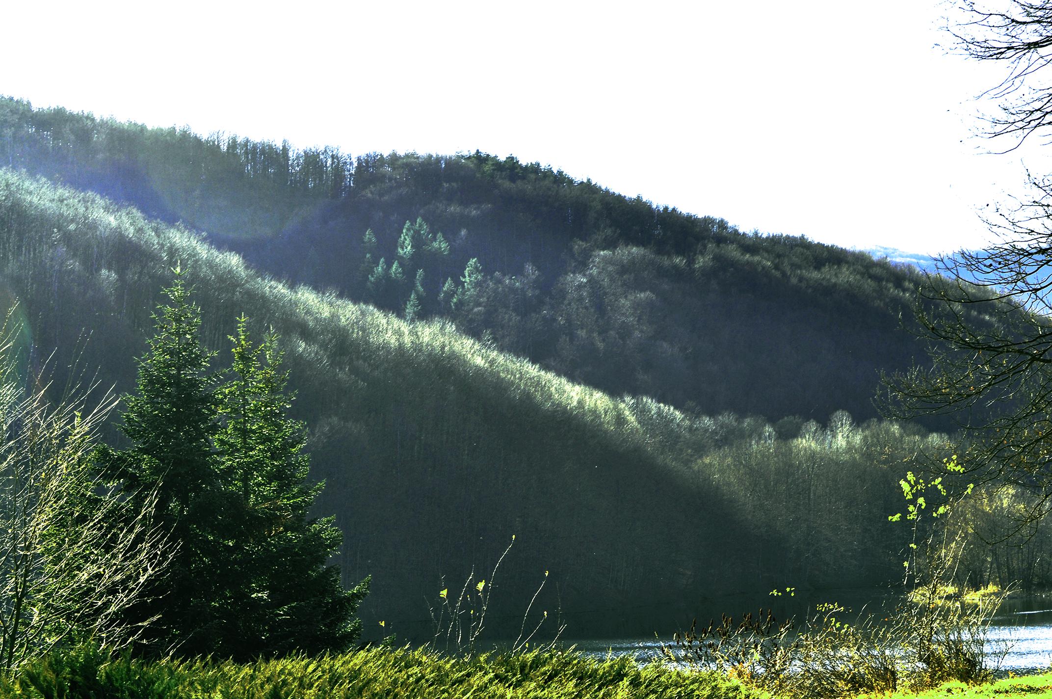 Пейзаж с борове, язовир и гора
